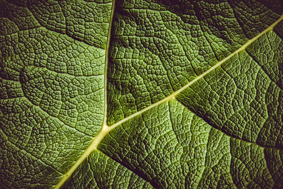 complex leaf